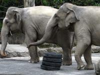 大象會跳舞