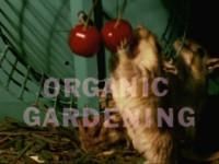 北美老鼠的生活與飲食