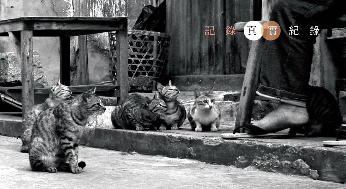 dao_qia_pian_kao_bei_.jpg